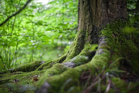 Transformerande process – skogsterapi